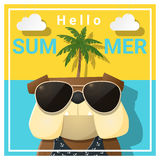 Hello summer background with dog wearing sunglasses Royalty Free Stock Images