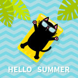Hello Summer. Black cat floating on yellow air pool water mattress. Palm tree leaf. Cute cartoon relaxing character. Sunglasses. S Stock Photography