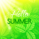 Hello summer card. Banner with typographic design. Bright background with leaves and sun Stock Photo