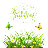Hello Summer with grass and butterflies on white background Stock Photo