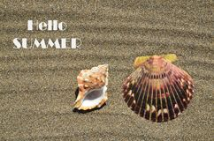 Hello Summer greeting card with Seashells on the ocean beach sand background. Summertime or vacation concept stock photos