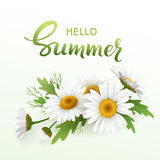 Hello Summer handmade lettering and bouquet realistic daisy, camomile flowers on white background. Vector illustration Stock Image