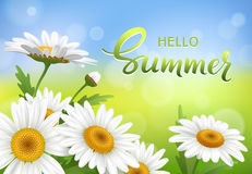 Hello Summer handmade lettering and meadow with realistic daisy, camomile flowers on transparent background. Vector Stock Photo