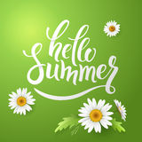 Hello Summer handmade lettering and realistic daisy, camomile flowers on green background. Vector illustration card Stock Photos