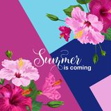 Hello Summer Poster. Floral Design with Pink Hibiscus Flowers for Party Invitation, Banner, Flyer. Tropical Background. Hello Summer Poster. Floral Design with Royalty Free Stock Image