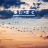 Hello summer text with crowd of birds Royalty Free Stock Image