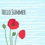 Hello summer text with cute colorful red field poppy flowers on. Blue background white stripes vector retro style seasonal illustration Royalty Free Stock Image