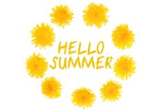 Summer Time. Blooming yellow dandelion flowers royalty free stock photography