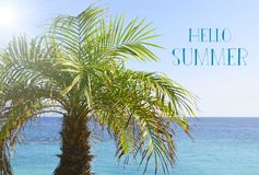 Hello Summer vacation message with palm tree on the beach by the ocean. Summertime concept.Selective focus Stock Photos