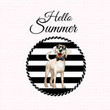 Hello Summer wallpaper Stock Photography