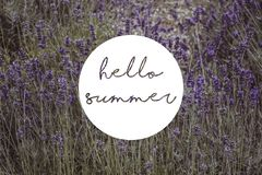Hello summer written in a circle over lavender field. Hello summer written circle over lavender field flowers floral french nature royalty free stock image
