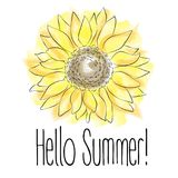 Hello Summer! Yellow Sunflower Vector illustration on white background. Handdraw pictures Royalty Free Stock Photos