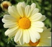 Hello Sunshine! Stock Images