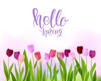 Hello Tulip spring banner Stock Photos