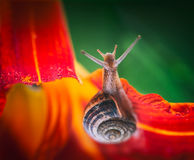 Hello, World!. A land snail is any of the numerous species of snail that live on land Royalty Free Stock Photos