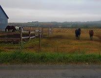 Helloo piękny koń obrazy stock