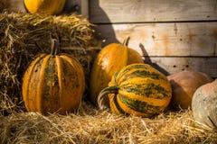 helloween тыква Стоковая Фотография RF