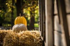 helloween тыква Стоковое Изображение RF