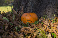 Helloween angry face pumpkin outside Royalty Free Stock Photo