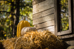 helloween bani Fotografia Royalty Free