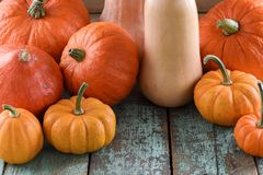 Helloween, Harvest Festival, Thanksgiving. Bright orange pumpkin. S and butternut squashes on robin egg blue background closeup Royalty Free Stock Photo