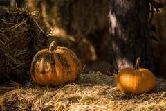 helloween pumpa Fotografering för Bildbyråer