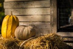 helloween pumpa Arkivbilder