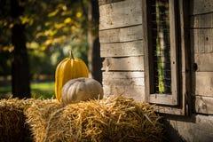 helloween pumpa Arkivbild