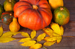 helloween pumpa Autumn Harvest Royaltyfri Foto