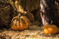 Helloween pumpkin Stock Photography