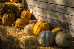 Helloween pumpkin. On hay at old wooden farm house Stock Images
