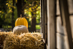 Helloween pumpkin. On hay at old wooden farm house Royalty Free Stock Image