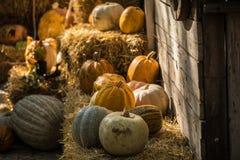 Helloween pumpkin. On hay at old wooden farm house Stock Photos
