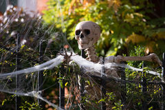 Helloween skeletons Royalty Free Stock Photography