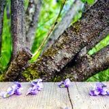 Hellpurpurne Frühlingsblumen und -blumenblätter auf einem Holztisch im Garten Stockbild