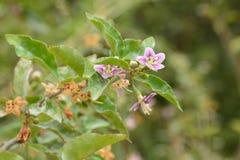 Hellrosa kleine Blumen auf einer Niederlassung eines Busches auf einem unscharfen grünen Hintergrund im Frühjahr stockfotografie