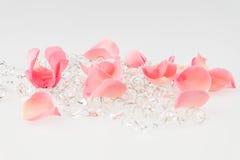 Hellrosa rosafarbenes Blumenblatt mit Kristall auf weißem Hintergrund Stockbilder