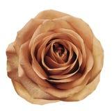 Hellrote Blume stieg auf Weiß lokalisierten Hintergrund mit Beschneidungspfad Keine Schatten nahaufnahme Für Auslegung Lizenzfreie Stockfotos