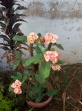 Hellrote Blumen Lizenzfreies Stockfoto