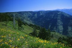 Hells Canyon 2. Facing North-East into Idaho from the Hells Canyon Overlook, OR Stock Photo