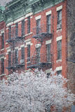 Hells Kitchen Building and Snow Covered Tree, Winter, New York Royalty Free Stock Photos