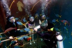Helmet Diving in the Great Barrier Reef Queensland Australia Royalty Free Stock Photo