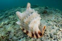 Helmet Shell on Seafloor Stock Image