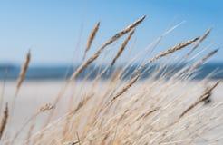 Helmgras op zandig strand Royalty-vrije Stock Afbeeldingen