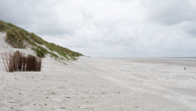 Helmgrassen in duinen op Ameland Royalty-vrije Stock Fotografie