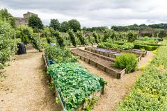 Formal english garden Royalty Free Stock Images