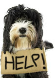 Help. Little dog ask help and the white background Royalty Free Stock Photography