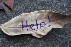 Help! written on leaf royalty free stock photos