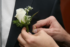 Help the groom to pin a wedding flower to suit Stock Photo