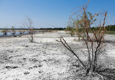Help nature help life. Poor vegetation on the lake Balta Alba Romania Stock Image